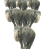 Elephants balancing on ball